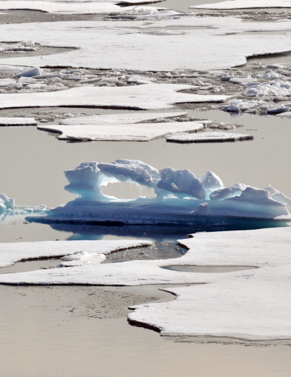 A melting ice floe in the Arctic Ocean resembles an alligator Aug. 12, 2009.