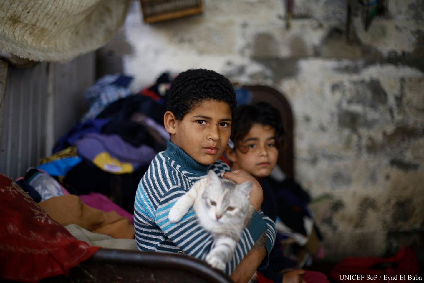 Two small Palestine boys with a cat.
